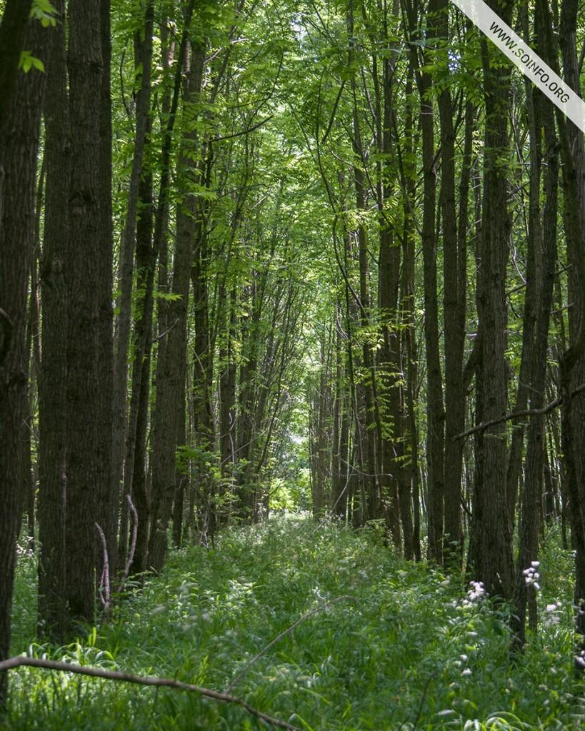 Sombor i okolina - Drvored - Vizitorski centar ''Karapandža'' (SRP ''Gornje Podunavlje'') - foto dana - 29.7.2019.